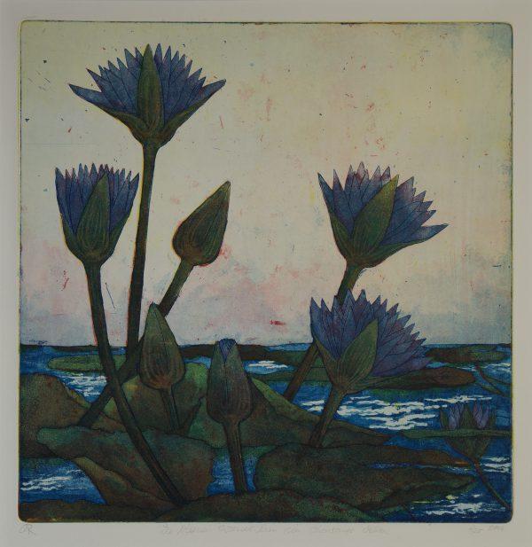 Waterlily, Okawango
